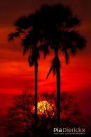 Afrikaanse zonsondergang, African Sunset, Occasus