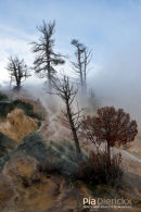 Mammoth Hot Springs, Lower terraces, Geothermal Areas of Yellowstone