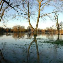 Mill Meadows Reflections