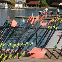 Pink Oars
