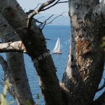 Sail Peep