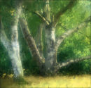 Tree and grasses