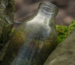 Bottled Forest
