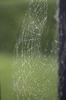Web of wonder