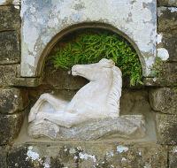 NT Wallington: the seahorse (3)