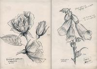 My own sketchbooks (2)