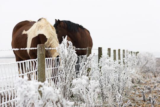 Shab Hill Horses