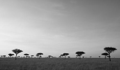 Trees, Masai Mara, Kenya