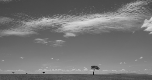 Lone Tree, Masai Mara, Kenya