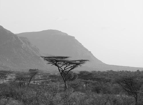Acacia Tortilis, Shaba, Kenya
