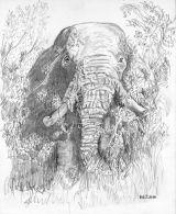 Bull Elephant, Masai Mara