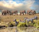 Elephant & Zebra in the Mara