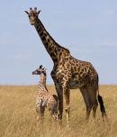 Mum and Baby.