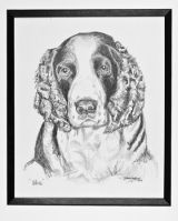 Pencil Portrait of 'Blue'