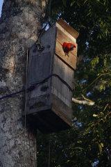 Artificial macaw nest