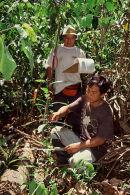 Brazil nut research