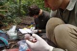 Macaw chick monitoring