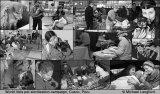 World Vets pet sterilisation campaign