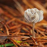 Mystery Fungus?
