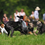 Dog Racing at the Yealmpton Show