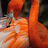 Flamingo Grooming