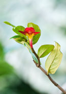 Costa Rica Foliage (1)