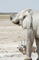Elephant (9)