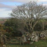 Tree and gate Dartmoor