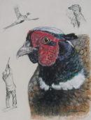Pheasant Studies