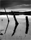 3 Dead Trees - Loch Garten