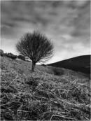 Lone Tree and Dead Bracken - Glen Loth