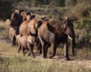 Elephants approaching the water hole at Treetops