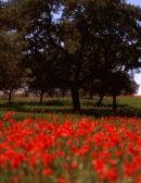 Andalusia:     Nr Grazalema