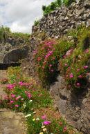 Flores - near Lajedo
