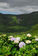 Flores - Landscape near Faja Grande