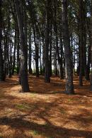 Brittany - Belle Ile - Woodland