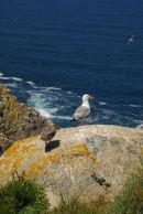 Galicia - Isla Cies